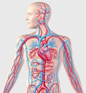 Μπορούμε να απαλλασσόμαστε από φλεβίτιδες, κυρσούς, ταχυκαρδίες, προβλήματα του κυκλοφοριακού,  περικαρδίου, να προλάβουμε εγκεφαλικά. 3