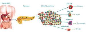 Γιατί παθαίνουμε διαβήτη τύπου II και πως αυτοθεραπεύομαστε. 14