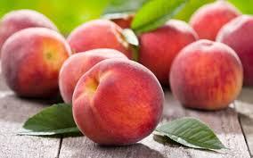 Διατροφή για πλήρη υγεία και ευεξία, με φύτρα και ακατέργαστα φρούτα, λαχανικά και ξηρούς καρπούς. Διαδικασία παραγωγής φύτρων 16