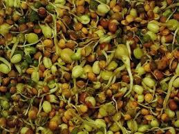 Διατροφή για πλήρη υγεία και ευεξία, με φύτρα και ακατέργαστα φρούτα, λαχανικά και ξηρούς καρπούς. Διαδικασία παραγωγής φύτρων 33