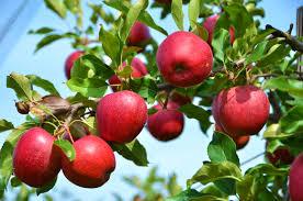 Διατροφή για πλήρη υγεία και ευεξία, με φύτρα και ακατέργαστα φρούτα, λαχανικά και ξηρούς καρπούς. Διαδικασία παραγωγής φύτρων 12