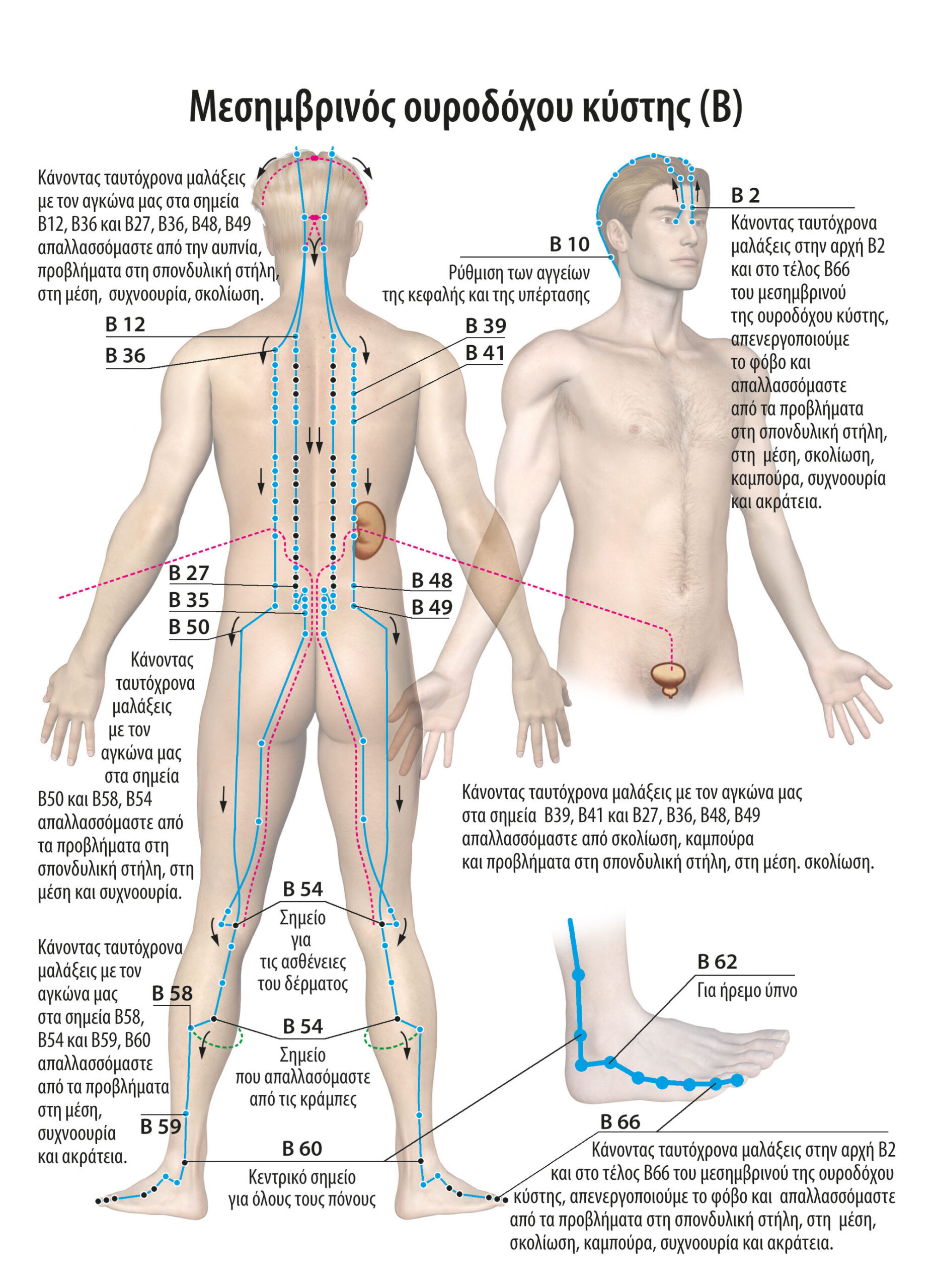 Αυτοθεραπεία από ακράτεια και συχνοουρία ξεμπλοκαρόντας τον μεσημβρινό της ουροδόχου κύστης και ενεργοποιόντας την ουροδόχο κύστη. 2