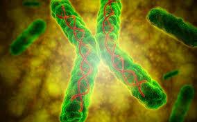 Διατροφή και παράγοντες που ενεργοποιούν τα γονίδια που μας οδηγούν στη Μακροζωία. 19