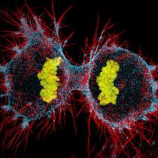 Διατροφή και παράγοντες  που ενεργοποιούν τα γονίδια που μας οδηγούν στη Μακροζωία. 9