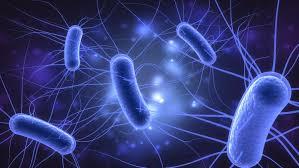 Αυτοθεραπεία από τις ουρολοιμώξεις με ενεργειακό ξεμπλοκάρισμα και διατροφή. 3
