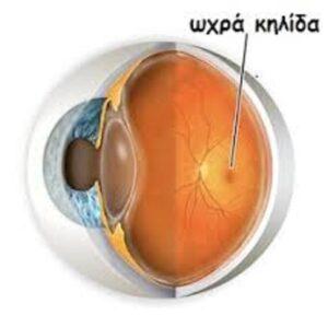 Μπορούμε να προλαβαίνουμε και να βελτιώνουμε προβλήματα στα μάτια όπως μυωπία,πίεση, καταράκτη, γλάυκωμα, την ωχρά κηλίδα, απελευθερώνοντας την ροή της ενέργειας, ξεμπλοκάροντας τους μεσημβρινούς που περικλείουν τα μάτια μας. 6