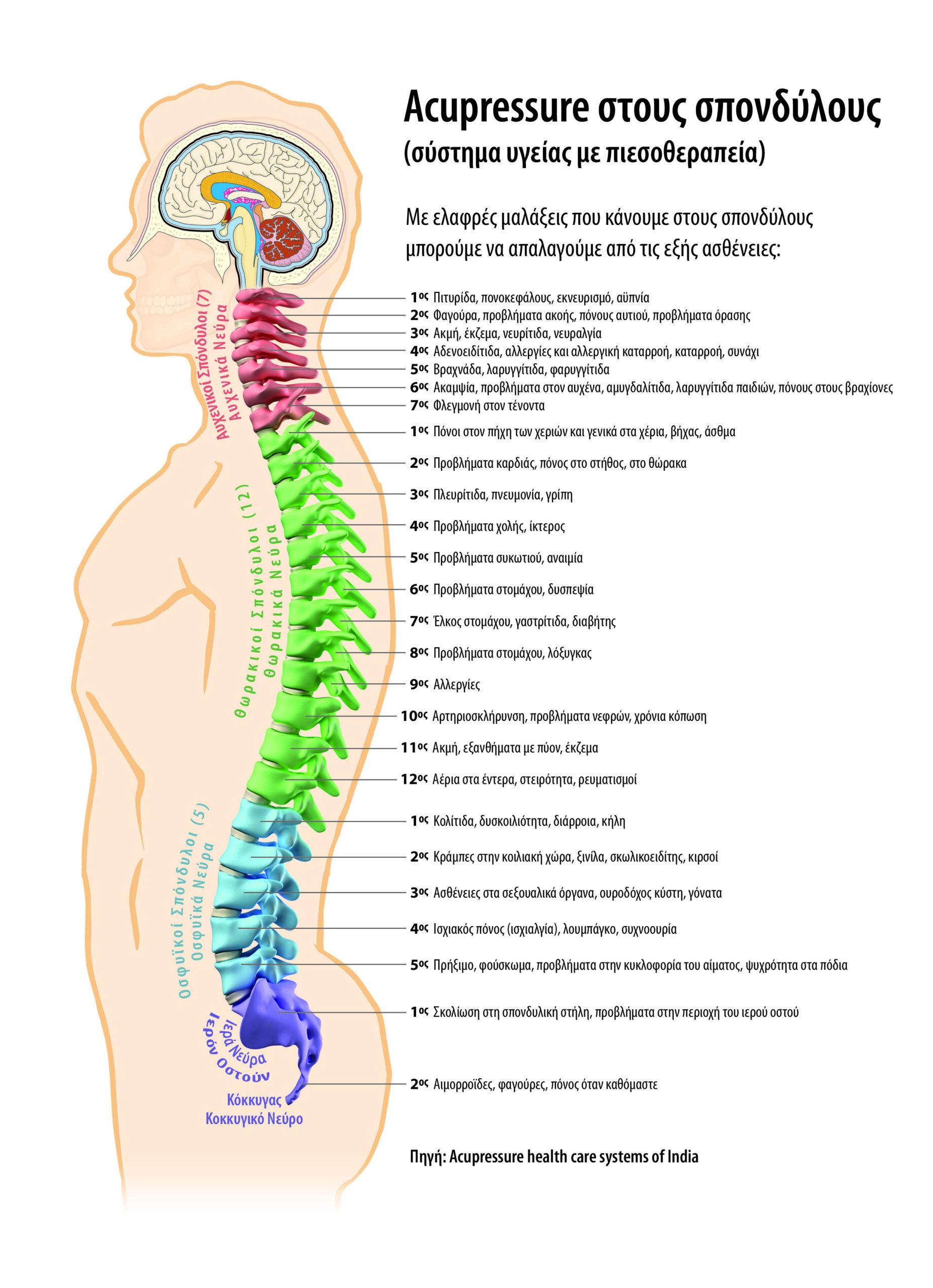 Αυτοθεραπεία από την πλειονότητα των ασθενείων κάνοντας ελαφρές μαλάξεις στη δεξιά και αριστερά πλευρά του ανάλογου για κάθε όργανο σπονδύλου. 1
