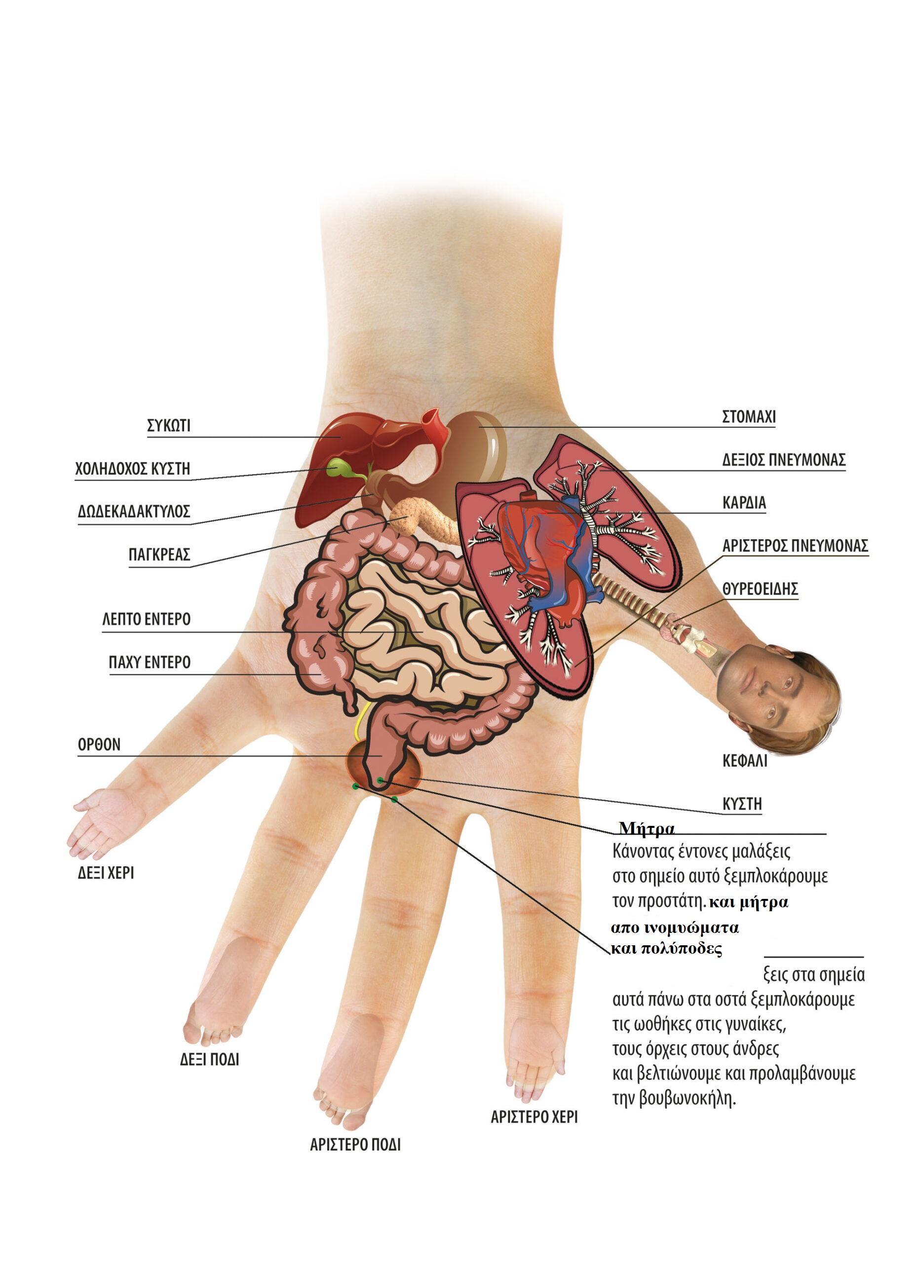 Αυτοθεραπεία από ινομυώματα και την αιμοραγία που προκαλούν, καθώς μετουσίωση συναισθηματικού βάρους σε χαρά ξεμπλοκάροντας τον μεσημβρινό της σκπλήνας πάγκρεας και λεπτού εντέρου 3