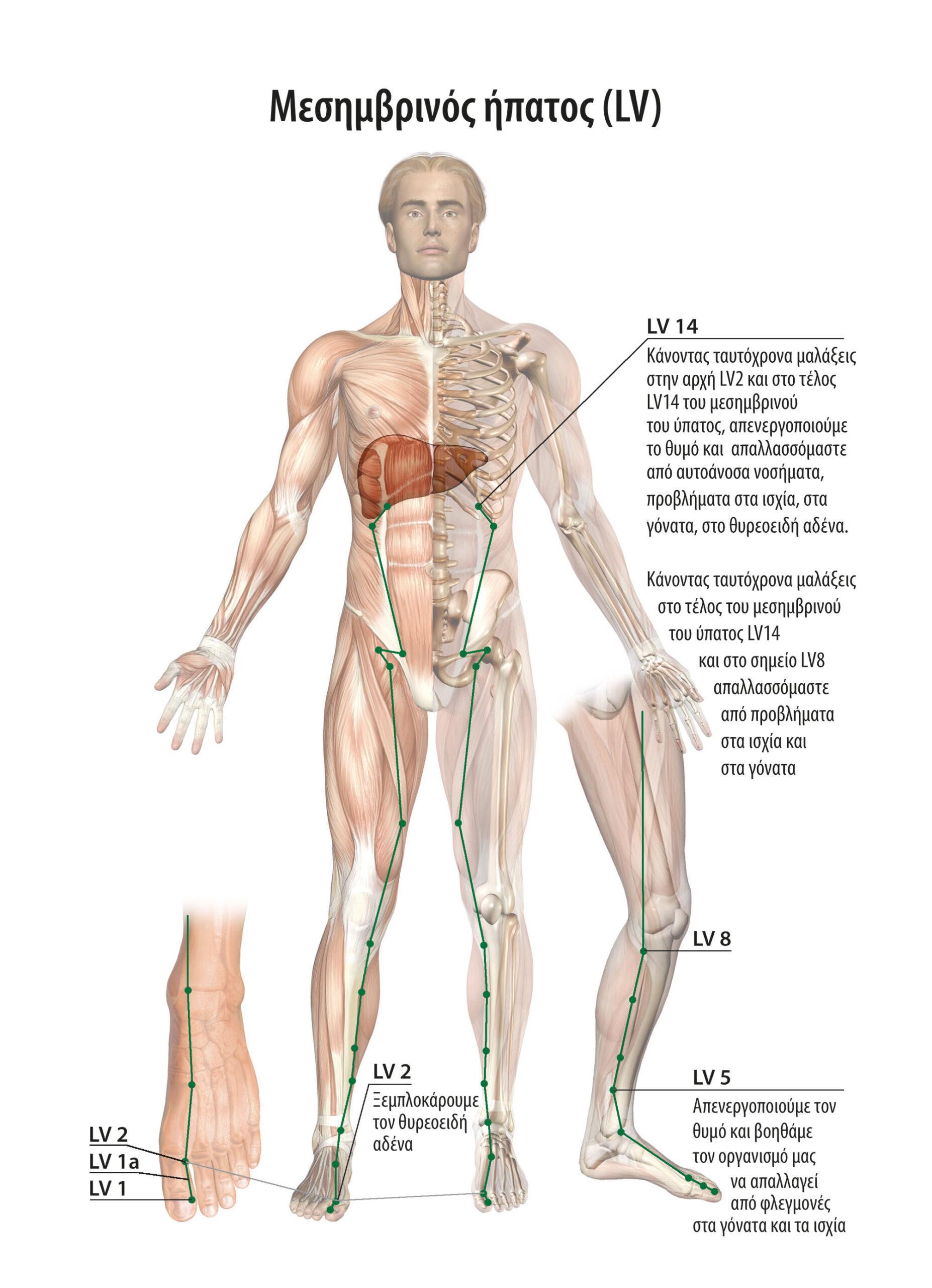 Αυτοθεραπεία από έντονους ιλίγγους, πονοκεφάλους, αυχενικό, λουμπάγκο, εντονους πόνους στη μέση,  πόνους στα γόνατα, ξεμπλοκάροντας  τους μεσημβρινούς της χολής, της ουροδόχου κύστης και ύπατος. 2