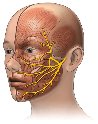 Αυτοθεραπεία από πάρεση του προσωπικού νεύρου, προβλημα στο στομάχι, αλλεργίες, τροχαντηρίτιδα (πρόβλημα ισχίων) ρευματοειδή και παραμορφωτική αρθρίτιδα, κήλες στη μέση και στον αυχένα, αρρυθμία, αδυναμία να ανέβει σκάλες, κατάθλιψη, φλεγμονές της Αναστασίας Μωραΐτη 11