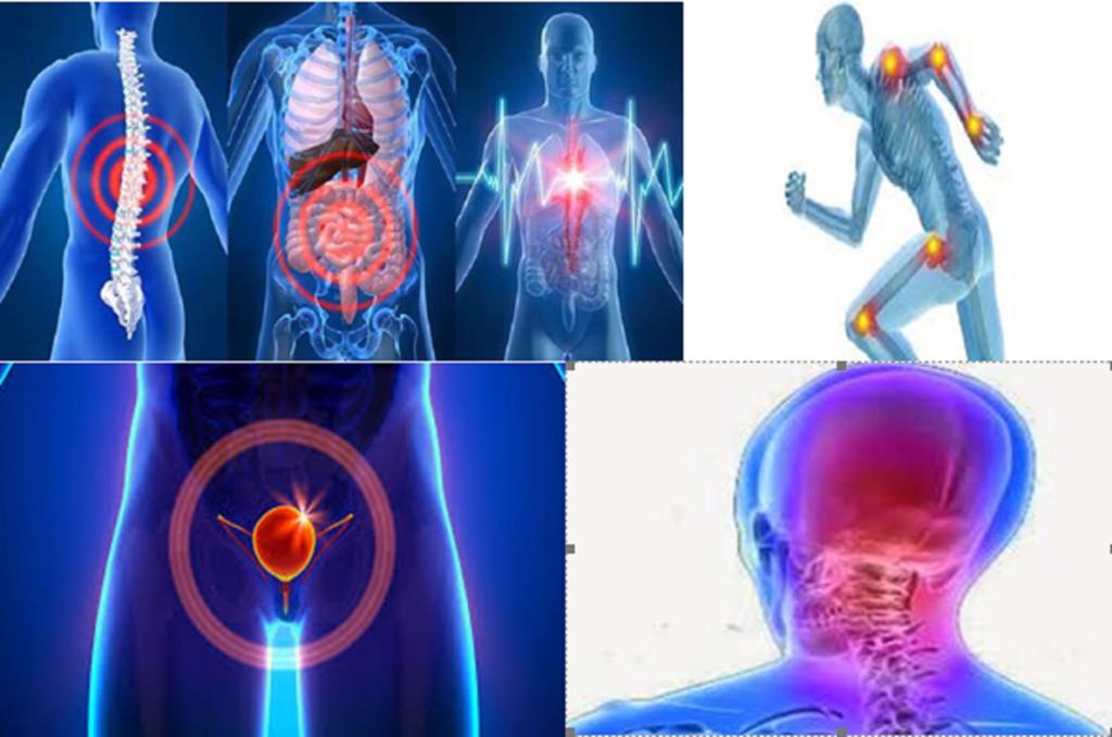 Αυτοθεραπεία από θλίψη, άσθμα,αυπνία, αυχενικό, οξύα οσφυαλγία στη μέση και ακράτεια, θυρεοειδίτιδα χασιμότο, κρίσεις πανικού, ταχυκαρδία της Εύης Κασίμη. 14